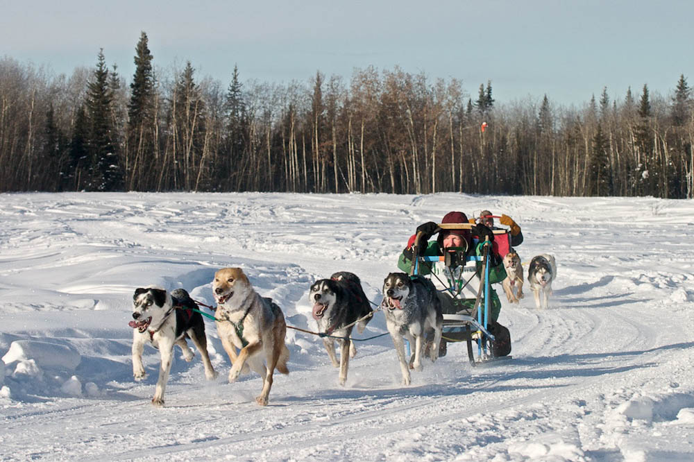 Carol mushing in North Pole